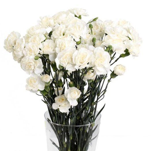 Букет из 35 белых гвоздик: букеты цветов на заказ Flowwow