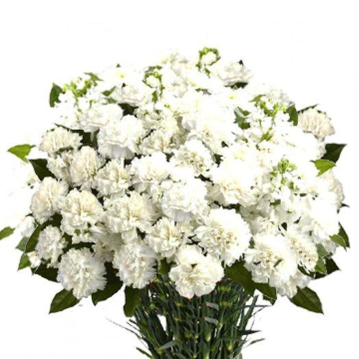 Букет из 45 белых гвоздик: букеты цветов на заказ Flowwow