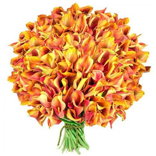 Букет из 101 разноцветной каллы: букеты цветов на заказ Flowwow