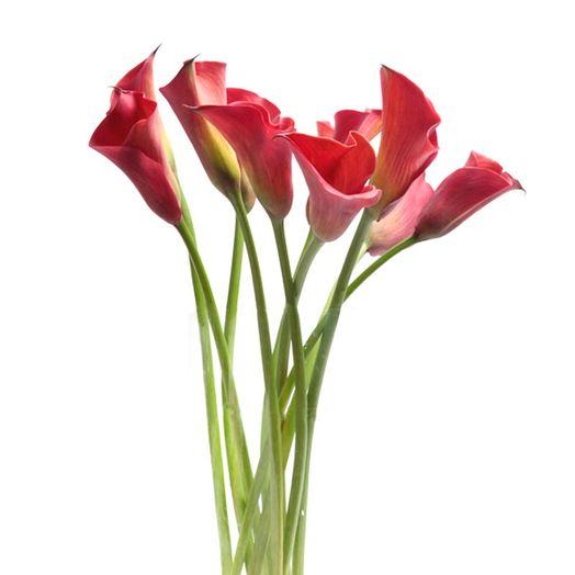 Букет из 11 красных калл: букеты цветов на заказ Flowwow