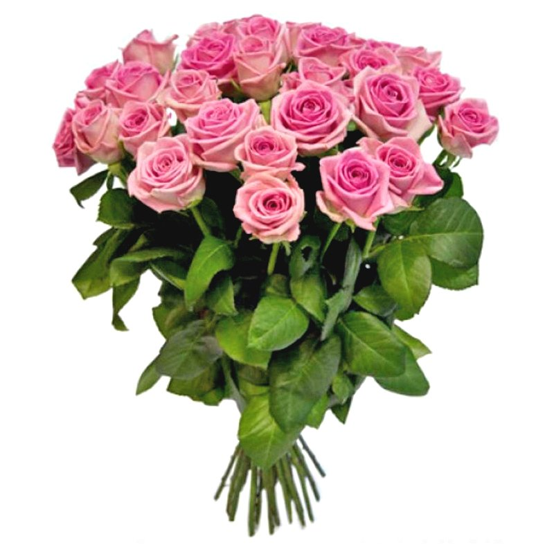 Букет из 25 розовых голландских роз 70 см: букеты цветов на заказ Flowwow