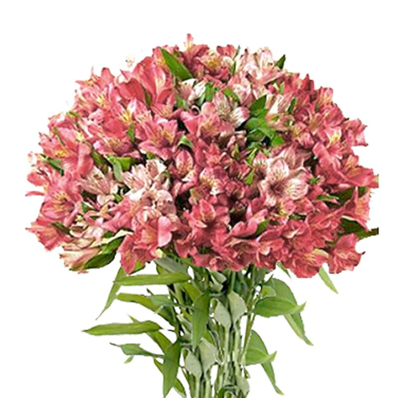 Букет из 55 розовых альстромерий: букеты цветов на заказ Flowwow