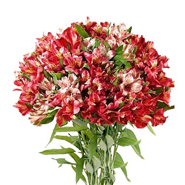 Букет из 51 красной альстромерии: букеты цветов на заказ Flowwow