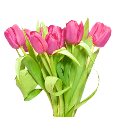 Букет из 7 розовых тюльпанов: букеты цветов на заказ Flowwow