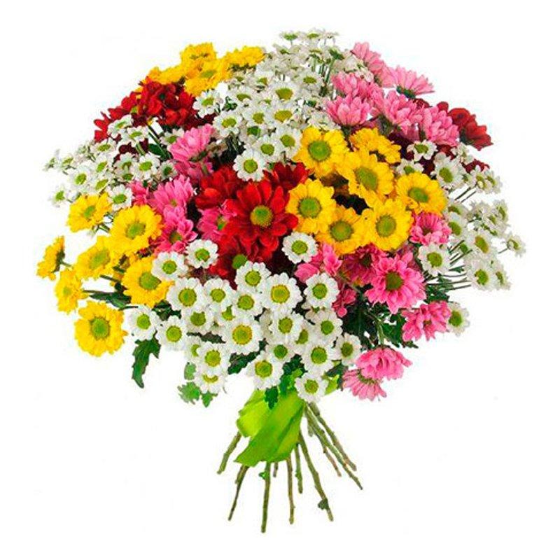 Букет из 35 разноцветных хризантем: букеты цветов на заказ Flowwow