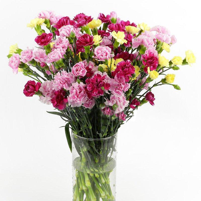 Букет из 45 разноцветных гвоздик: букеты цветов на заказ Flowwow