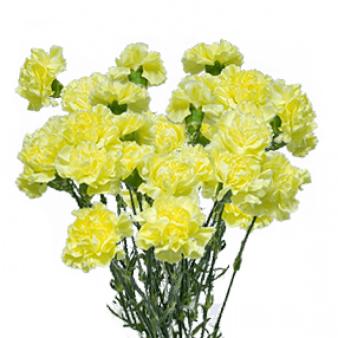 Букет из 25 желтых гвоздик: букеты цветов на заказ Flowwow