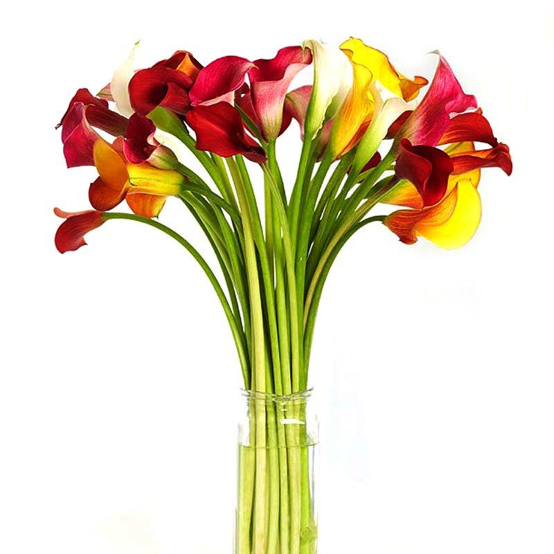 Букет из 30 разноцветных калл: букеты цветов на заказ Flowwow